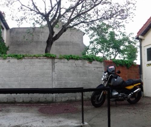 arbre salissures moto fleurs fanees.jpg