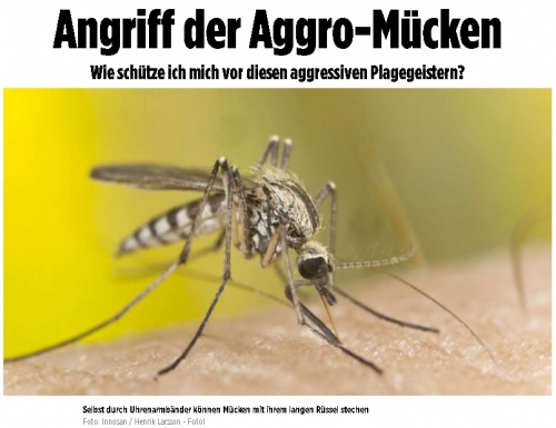 moustique jaune.jpg